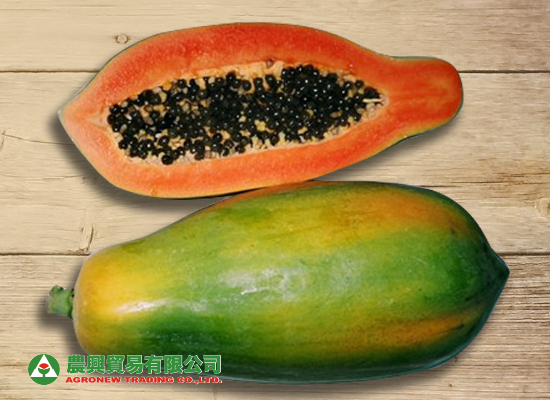 Hybrid Tainong No. 1 Papaya/ 台農一號木瓜